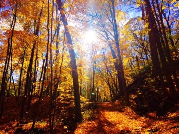 manitou-preserve-woods