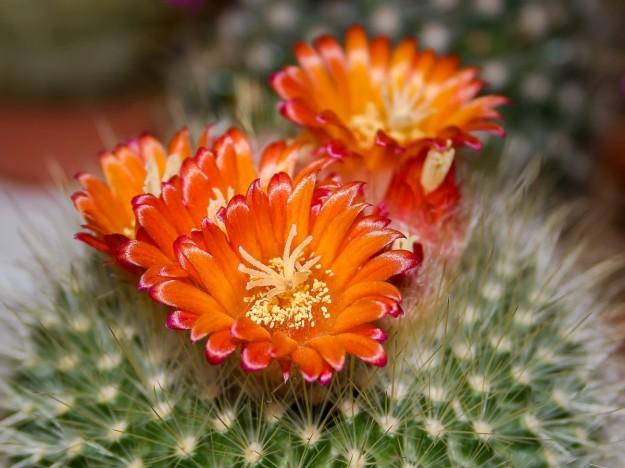 cactus di jayawickrema matchbook lit